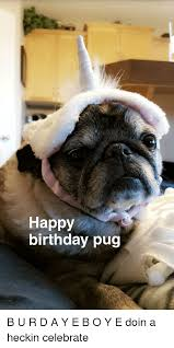 Pug Birthday Meme - happy birthday pug b u r d a y e b o y e doin a heckin celebrate