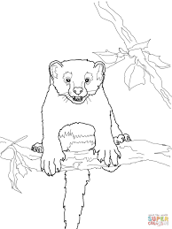 fisher cat coloring pages free coloring pages