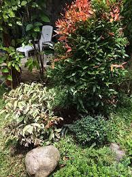 choosing and using ornamental plants the manila times
