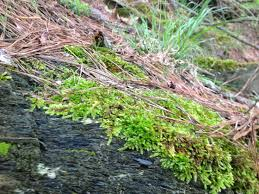 the causes of moss in lawns u0026 how to get rid of it the home
