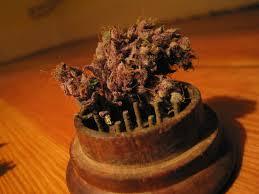 buy marijuana grow box