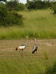 northern region uganda mapio net