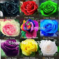 Black Rose Flower Aliexpress Com Buy 540pcs Mix 9 Color Red Green Pink Yellow