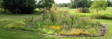 native prairie plants audubon garden