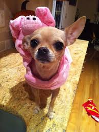 Yorkie Costumes Halloween Pig Costume Chihuahua Dog Costume Halloween Pet Costumes