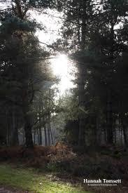 sherwood forest christmas 2016 img 07171 jpg