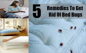 how can you get rid of bed bugs 5 best remedies to get rid of bed bugs easy ways to get rid of