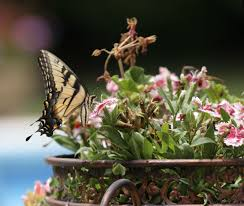 the best butterfly container garden ideas u tips for creating pict