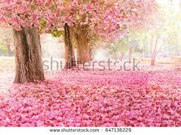 pink flower tunnel pink flower trees stock photo 647136229
