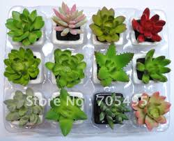 mini plant pot 120 awesome exterior with cactaceae potted plant