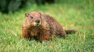 early spring happy groundhog alliance insurance services