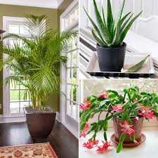 Simple Home Decorating by Healthy Home Simple Home Décor Solutions With Health Benefits