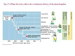 chapter 17 the evolution of plant and fungal diversity ppt download