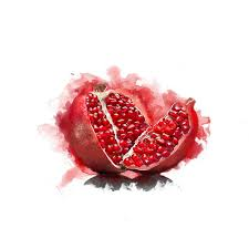 best 25 pomegranate drawing ideas on pinterest pomegranate art