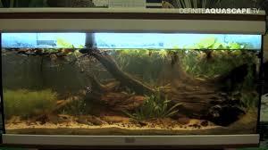 biotope aquarium design contest 2014 the 5th place south