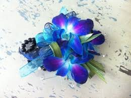 blue orchids 50 shades of blue orchid wrist corsage in maple grove mn maple