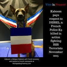 belgian malinois k9 attack belgian shepherd dog michigan dog training