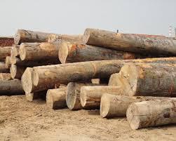 qingdao green forest wood co ltd wood importer