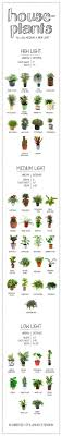 houseplants that need little light how much light does your houseplant need find out on this handy