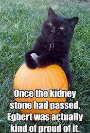 Kidney Stones Meme - kidney stones