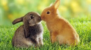 rabbit rabbit rabbit rabbit hip new jersey