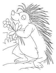 kids coloring pages porcupines free printable coloring