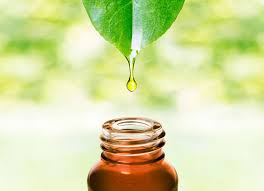 Tea Tree Oil Bathroom Cleaner The Miracle Of Tea Tree Oil 80 Amazing Uses For Survival The