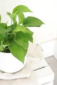 Plant Delivery The Zen Succulent Durham U0027s Neighborhood Plant U0026 Gift Shopthe Zen