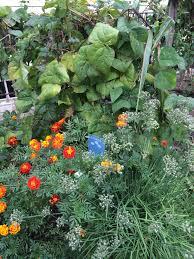 square foot gardening flowers img 2943 jpg