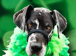 st patrick u0027s day pawty at the dog bar charlotte on the cheap
