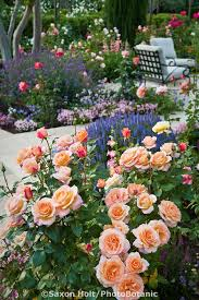 best 25 california garden ideas on pinterest drought tolerant