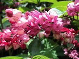 flowers bloom all year round round designs