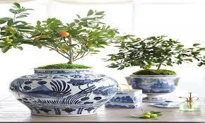 best indoor tree best indoor trees ideas about indoor trees on