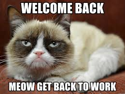 Welcome Back Meme - welcome back meow get back to work grumpy cat laying down meme
