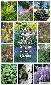 18 best fragrant shrubs u0026 trees images on pinterest shrubs