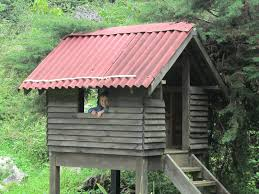 ben and katie in haiti may asher found a tree house idolza