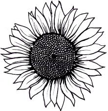 free sunflower clipart black and white cliparts suggest