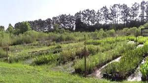 native plant nursery fort myers biosphere nursery winter garden fl youtube