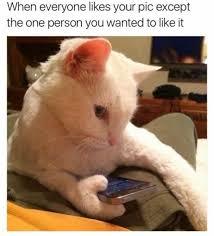 Cat Memes Tumblr - when cats text hilarious posts on tumblr i can has cheezburger