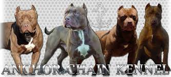 american pitbull terrier kennels in michigan anchor chain kennel home