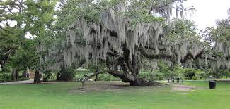 moss treatment removal florida