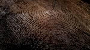 is quarter sawn wood more expensive quarter sawn vs flat sawn oak the ultimate guide modern