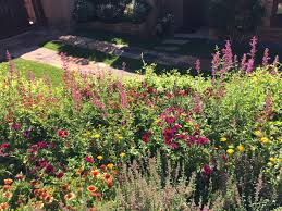 how do i care for decorative grass santa fe gardening blog