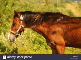 ferrari horse vs mustang horse horsepower stock photos u0026 horsepower stock images alamy