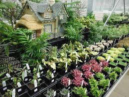 homelife 10 best plants for vertical gardens easy plants to grow cheap hardy plants garden design wildlife