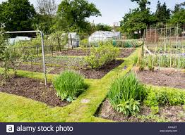 well tended allotment garden in springtime a plot of land for