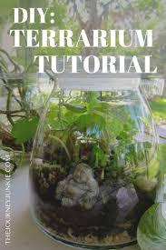 200 best garden delights terrariums u0026 houseplants images on