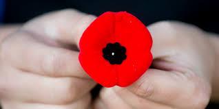 veterans day poppy flower graphic