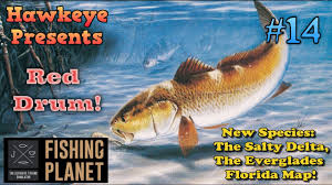 Everglades Florida Map by Fishing Planet S2 Ep 14 New Species The Common Red Drum Of