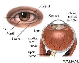 Picture Of Eye Anatomy External And Internal Eye Anatomy Medlineplus Medical